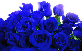 One dozen wrapped blue roses