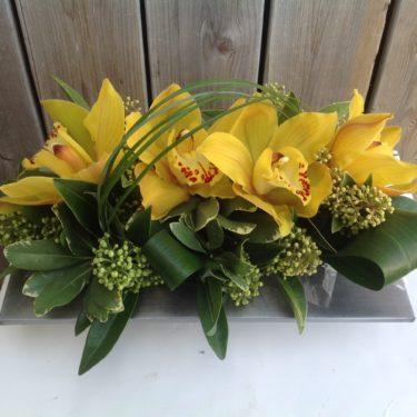 Stunning Orchids